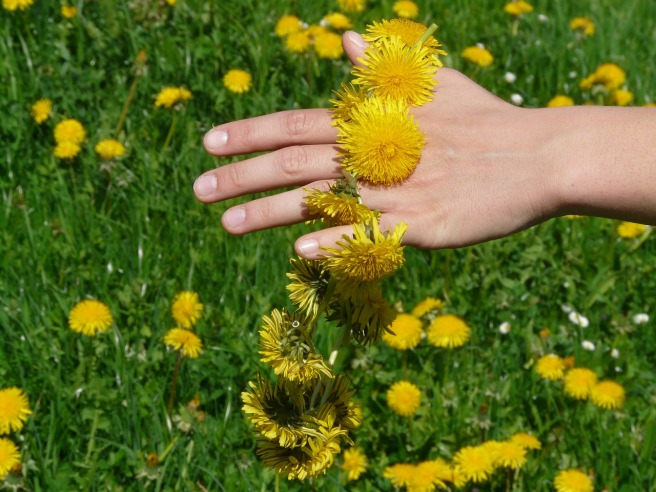 home business dandelion